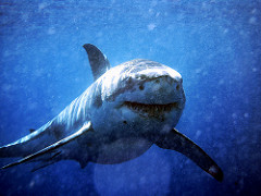 True or False About Sharks