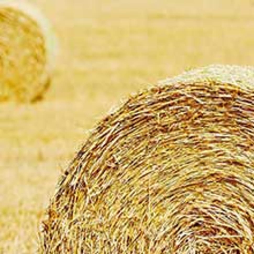 Hay Straw and Silage