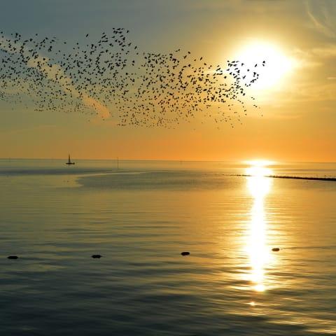 Nordsee-Sonnenuntergang