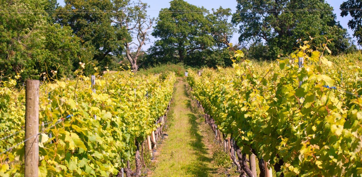 7. Chapel Down winery, Kent