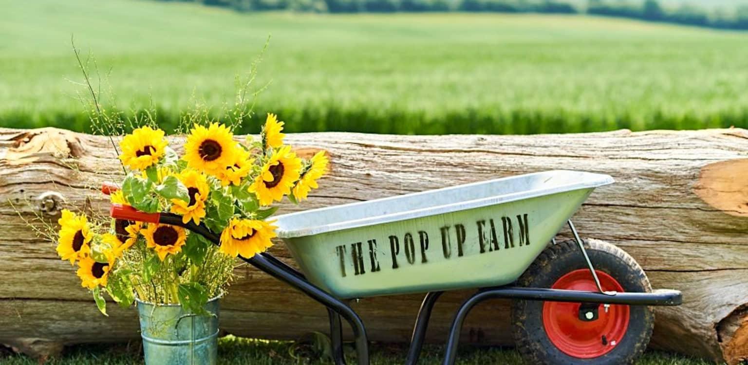 The Pop-Up Farm, Hertfordshire
