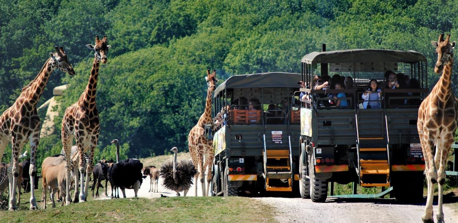 Camp on Safari