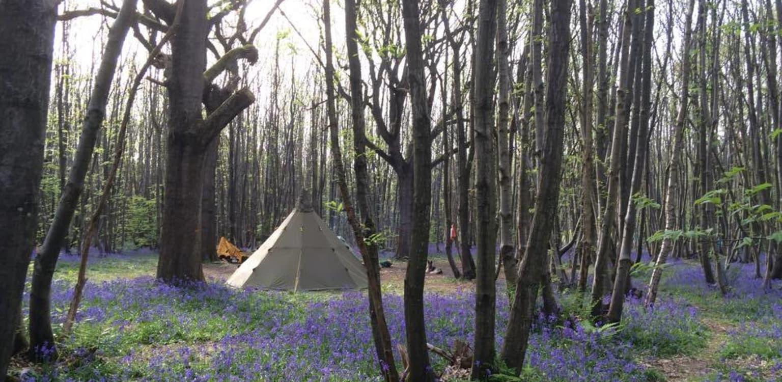 Badgellswood Camping, Kent