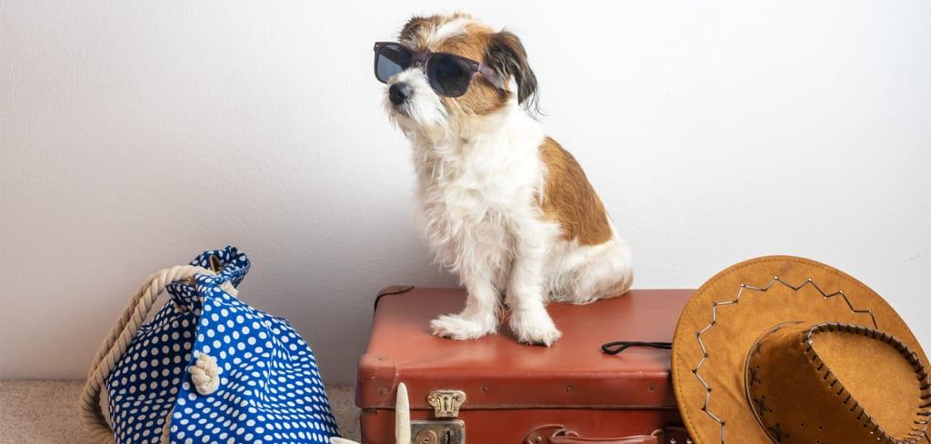 Hund mit Sonnenbrille sitzt auf Koffer