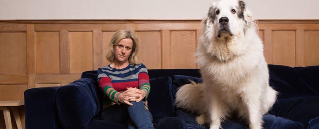 Wie Jojo Moyes zu ihrem Pyrenäenhund BigDog kam – eine Liebesgeschichte