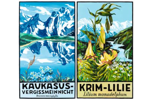 Kaukasus-Vergissmeinicht & Krim-Lilie