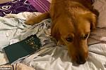 Lucky for dog bite, passport…