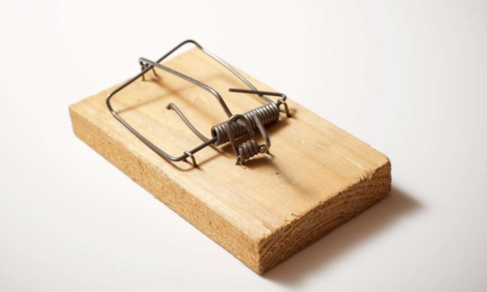 Types of Mouse traps