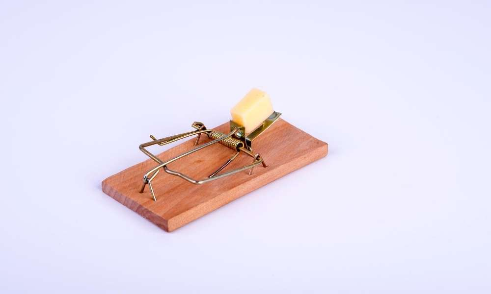 Buy mouse traps from online stores