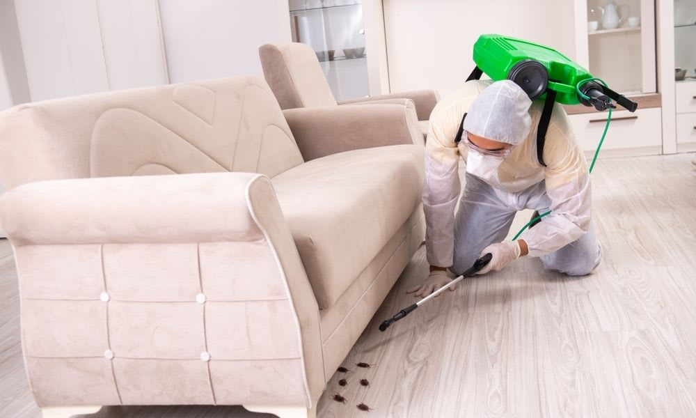 Get rid of pest