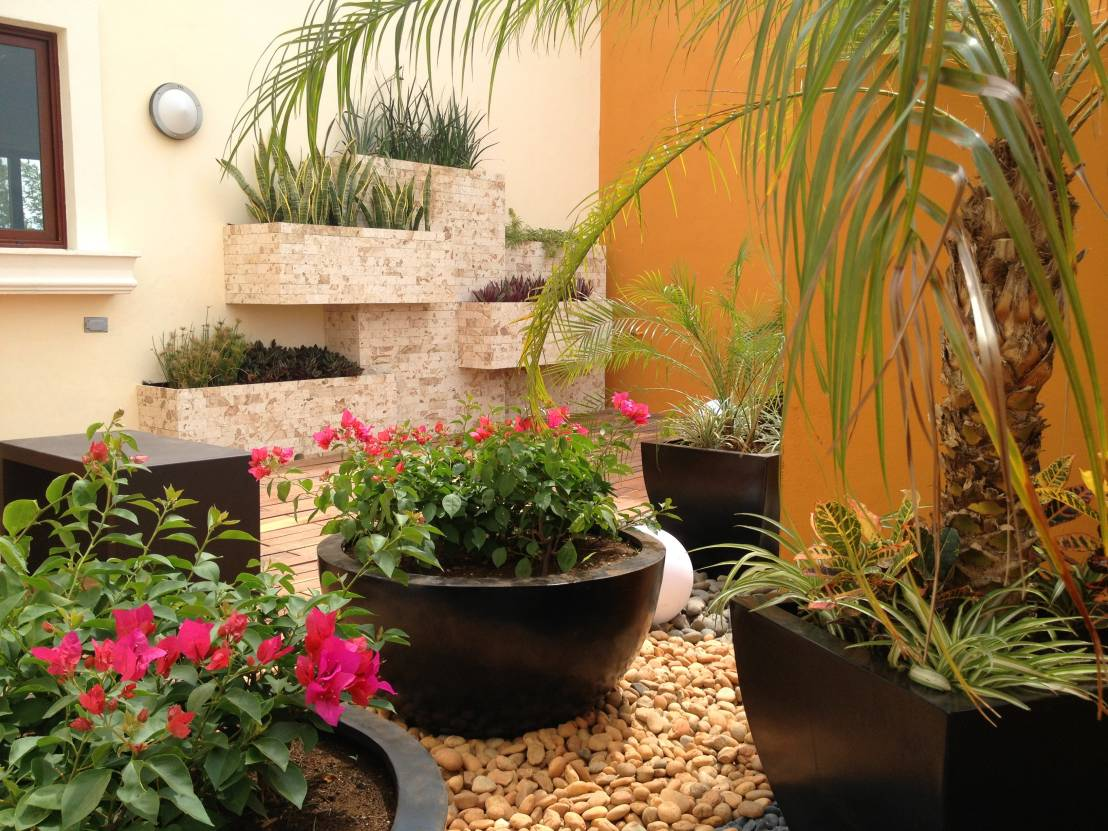 C mo dise ar un patio peque o 6 tips fabulosos for Plantas para decorar jardines pequenos