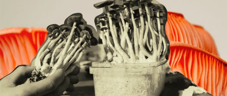Black and White image of mushrooms