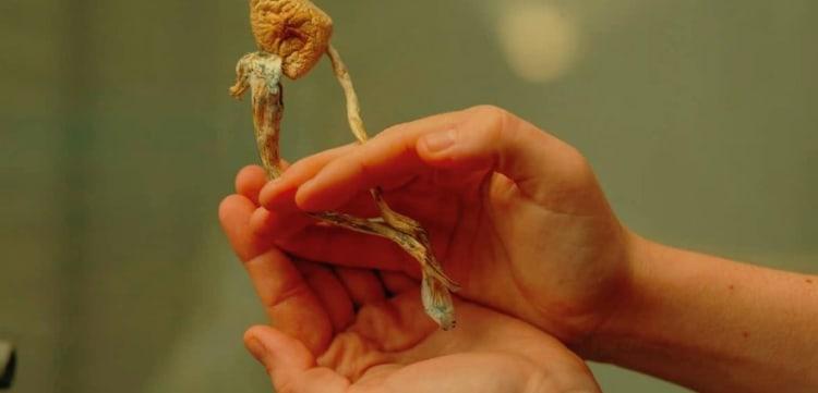 Someone holding mushrooms