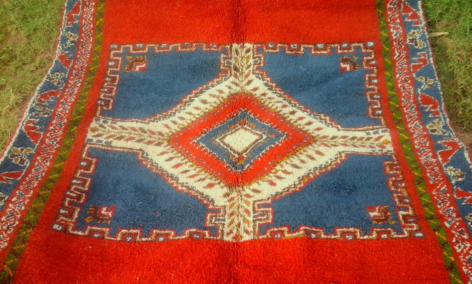 Pile Knot Rug  Cotton Warp Colored Morocco