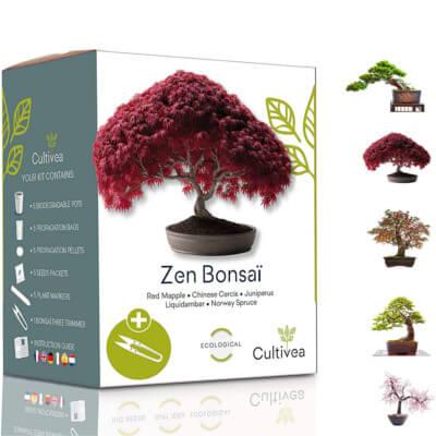 Kit Bonsai prêt à pousser