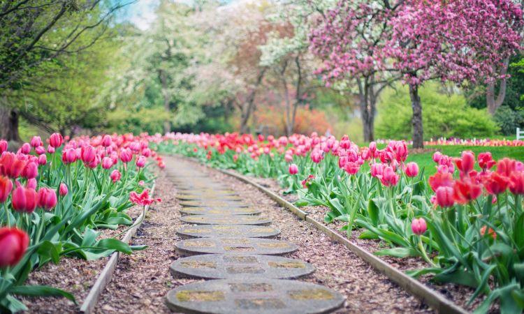Des belles tulipes - Inspiration Hortus Box