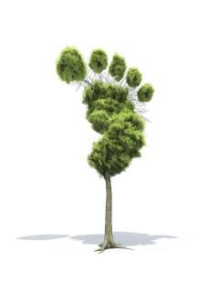 Sostenibilidad de huella verde