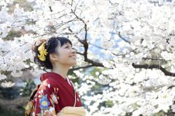 Blossoms Japan