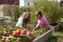Hostel guests growing vegetables in the garden