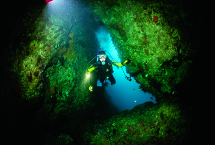 Diving the Poor Knights Islands