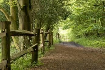 YHA Tanners Hatch Surrey Hills :