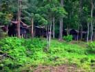 Nusa Holiday Village-Taman Negara Malaysia-image