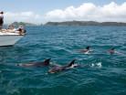 YHA Bay of Islands Paihia-image