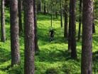 Vallåsens värdshus-image