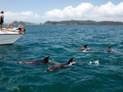 YHA Bay of Islands Paihia