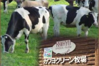 Oirase - Kawayo Green YH :