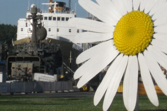 Turku - Laivahostel Borea : Large wooden sunflower in front of the S.S. Bore, home of the Laivahostel Borea