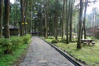 Xitou Youth Activity Centre : Xitou Youth Activity Centre hostel garden with wooded area, benches and a pathway