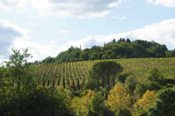 Florence - Ostello del Chianti : Fields of Florence
