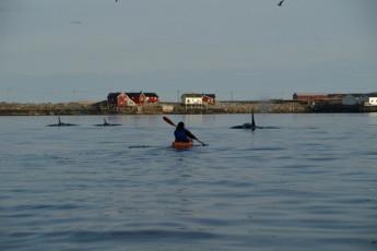 Lofoten Å : A sea whale