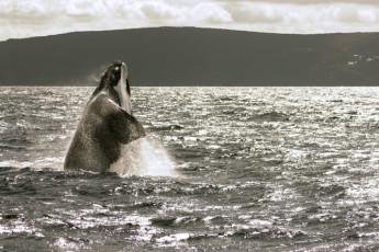 Albany YHA : Albany YHA whalewatching