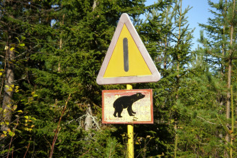 Sälen : Bear sign