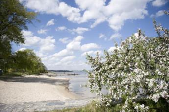 Kivik : Kivik beach