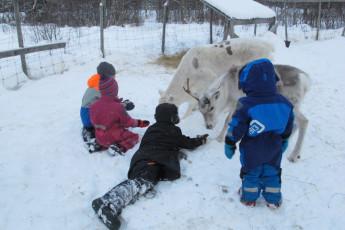 Grövelsjön Mountain Station : Dalarna - Grovelsjon Mountain Lodge Hostel in Sweden children's reindeer activity