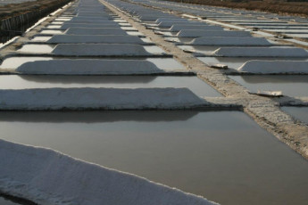 Tavira : Salt pads in area surrounding Tavira hostel in Portugal