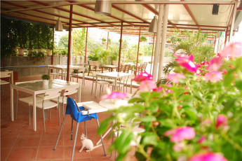 Guangzhou Catalpa Garden Youth Hostel : View over outdoor dining terrace at the Guangzhou Catalpa Garden Youth Hostel in China