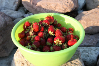 Hagaby/Lantgården : Bowl of Strawberries outside Hagaby/Lantgarden Hostel, Sweden