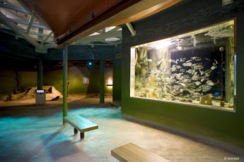 Oostduinkerke - De Peerdevisser : Oostduinkerke De Peerdevisser aquarium