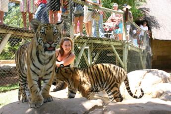 Oudtshoorn - Backpacker's Paradise : Tiger Petting near Oudtshoorn - Backpacker's Paradise Hostel, South Africa