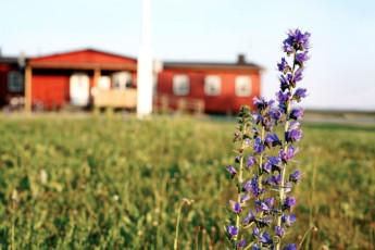 Bunge/Fårösund : Garden Feature at Bunge/Farosund Hostel, Sweden