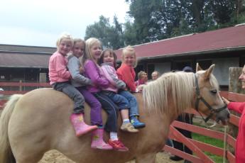 Barth - Reiterhof mit Zeltplatz : Barth hostel in Germany horse riding
