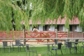 Barth - Reiterhof mit Zeltplatz : Barth hostel in Germany garden with horse