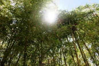 Takayama - Hida-Takayama-Tensho YH : Hida-Takayama-Tensho Youth Bamboo Trees