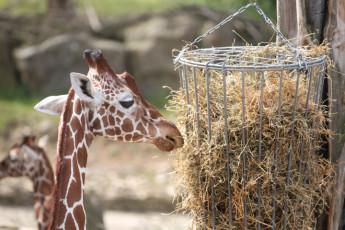 Osnabrück : jirafas en OSNABRüCK OSNABRüCK Zoo hostal