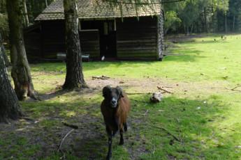 Bokrijk/Genk : Animal farm at the Bokrijk/Genk hostel in Belgium