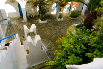 Djerba : Courtyard in Djerba Hostel, Tunisia